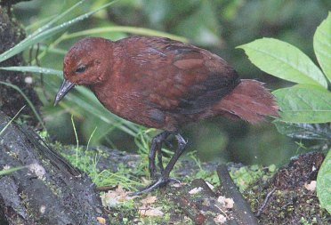 Chestnut Rail