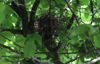 Finally - the empty nest