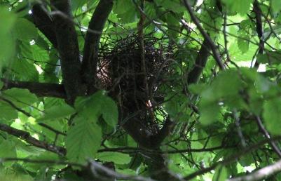 Finally - the empty nest