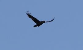 Raven, Undisclosed site. 18th April