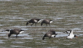 Black Brant, East Hills, 5th October