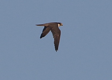 Hobby, Cockley Cley