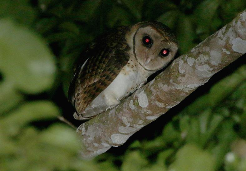 SERAM M OWL 4